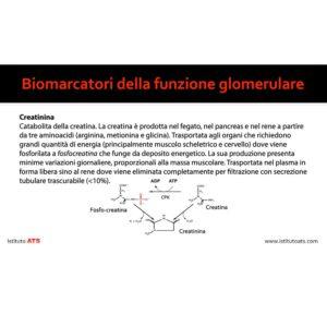 Funzione-Gromerulare